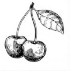 Cherry cherry lady  вареники з вишнею,сметаною  та вишневим джемом) - 12  pcs.