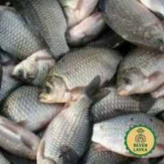 Риба свіжа