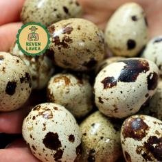 Яйця перепелині 20 шт