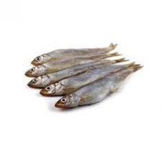 Риба Корюшка.