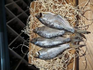 Риба Тарань